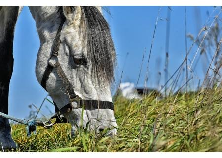 Przejażdzki konne