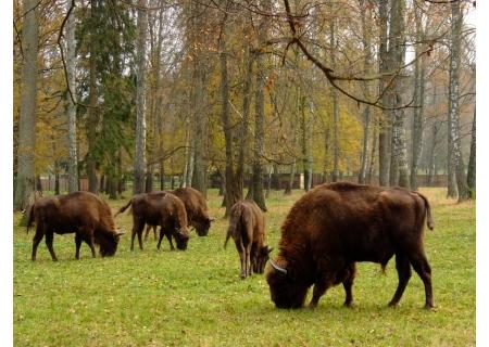 Rezerwat Pokazowy Żubrów