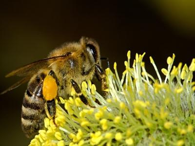 Skansen i muzeum pszczelarstwa w Narewce